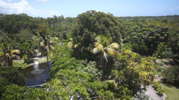 Island Jungle Rise Up