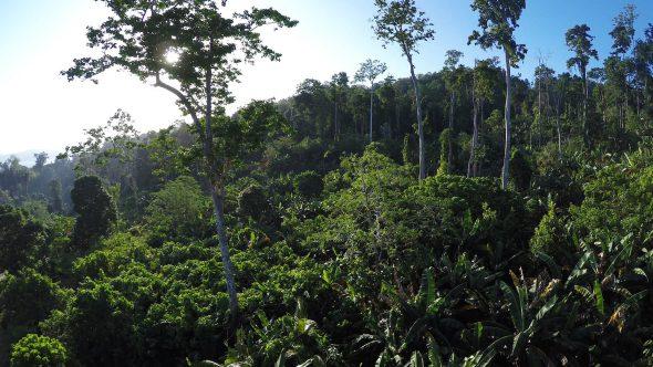 Sorong Jungle 4