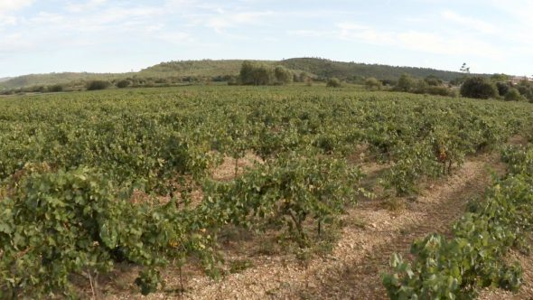 Cassis Vineyard Fly Over