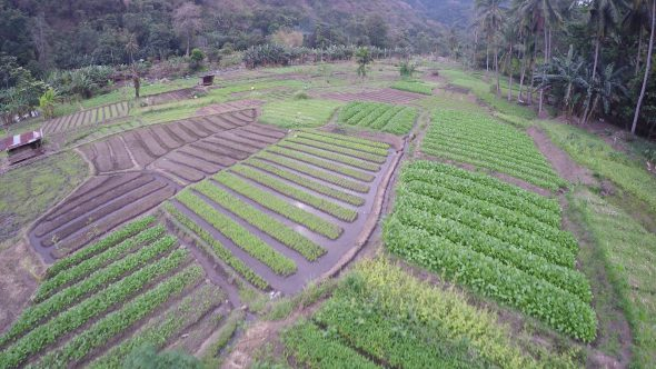 Flores Indonesia Farm 1