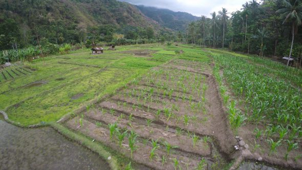 Flores Indonesia Farm 5 Royalty Free Stock Drone Video Footage