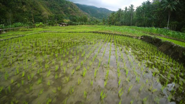Flores Indonesia Farm 6 Royalty Free Stock Drone Video Footage