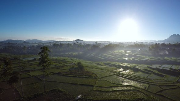 Rice Paddy Fields 3