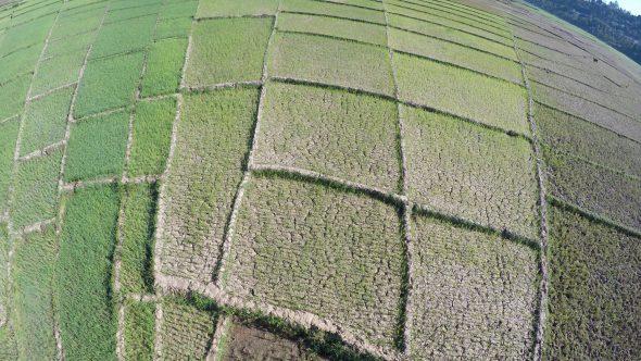 Rice Paddy Fields 9