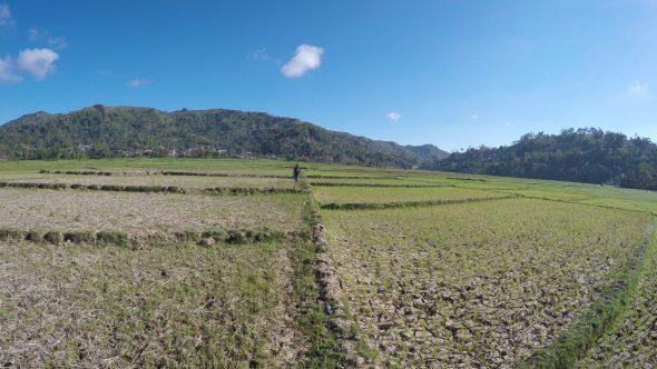 Rice Paddy Fields 11