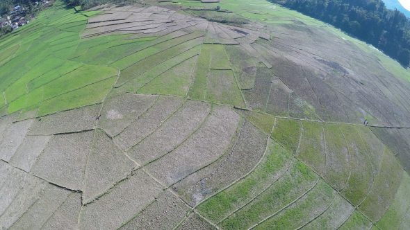 Rice Paddy Fields 12 Royalty Free Stock Drone Video Footage