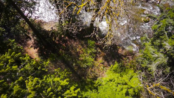 Forest River Descent Royalty Free Stock Drone Video Footage