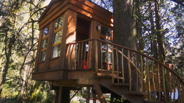 Tree House Rise Royalty Free Stock Drone Video Footage