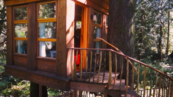 Circling The Tree house 1 Royalty Free Stock Drone Video Footage