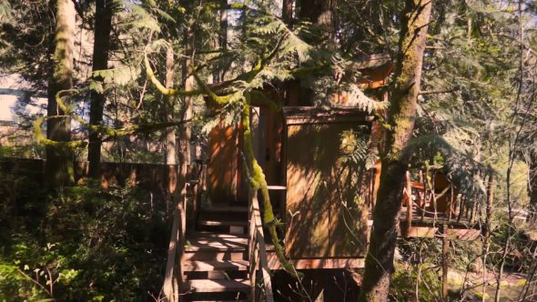 Circling The Tree house 2 Royalty Free Stock Drone Video Footage
