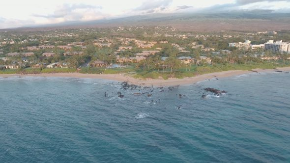 Maui Beach High Pan Left Royalty Free Stock Drone Video Footage