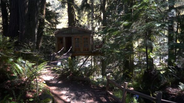 Tree House Approach Royalty Free Stock Drone Video Footage