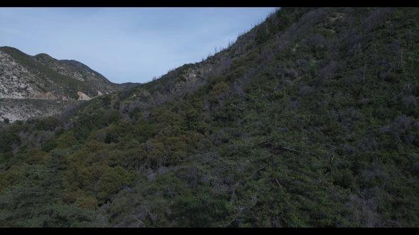 Aerial, vast forest landscape