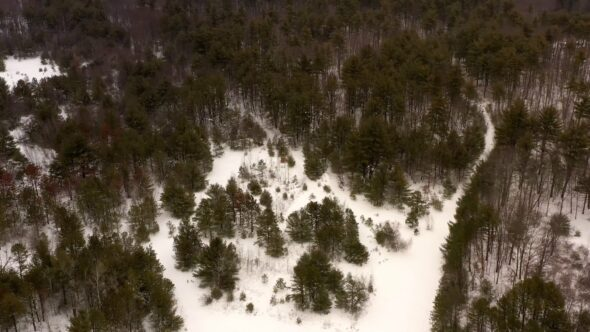 Winter Forest Royalty Free Stock Drone Video Footage