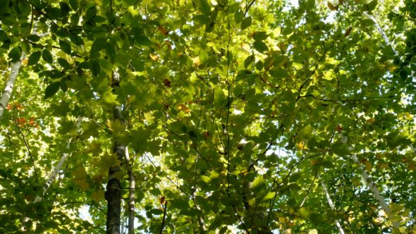 Lush Forest Foliage
