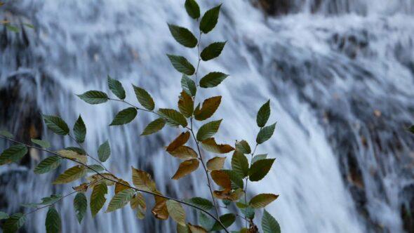 Leaves Dancing Before a Waterfall