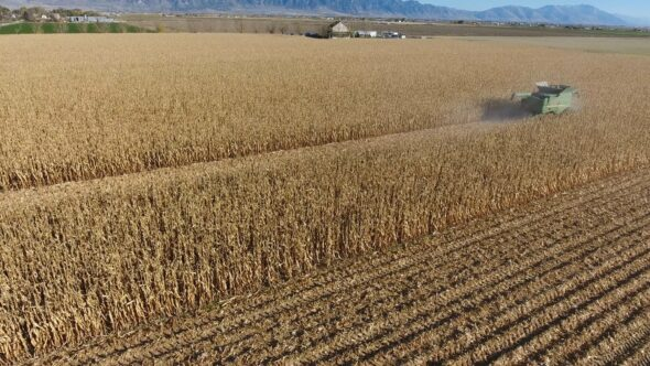 Farming and Harvesting Corn with a Tractor and Combine Royalty Free Stock Drone Video Footage