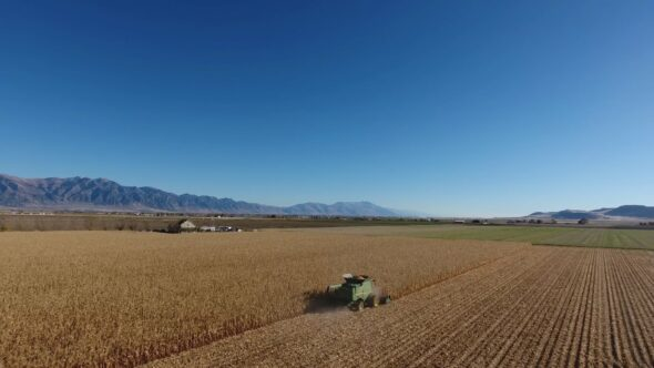 Harvesting Corn 1 Royalty Free Stock Drone Video Footage
