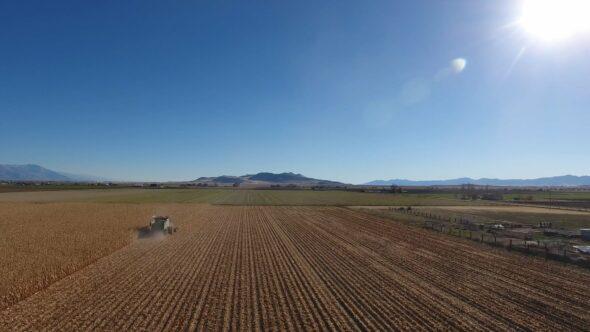 Harvesting Corn 2